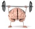 Gehirnhälften verbinden