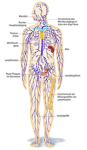 Mit der Smovey-Lymph-Aktivierung das Immunsystem stärken | Gesünder ...