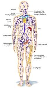 Smovey Lymphmassage